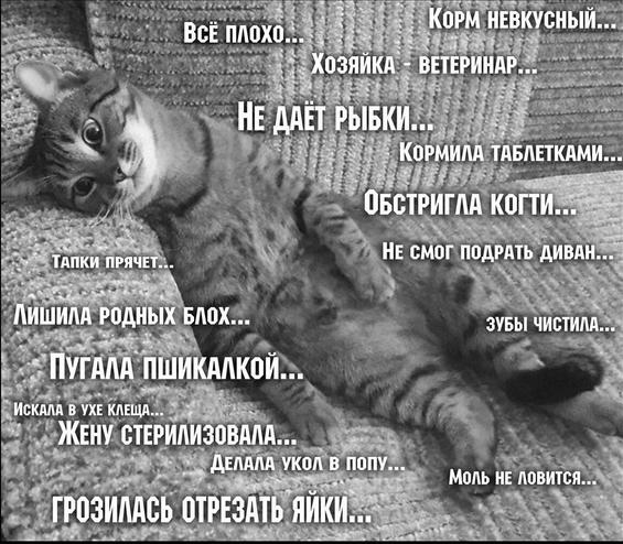 cat_suffer