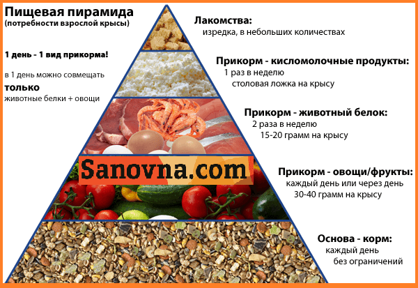 racion_pitanija_domashnih_kris